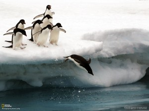 Animals___Under_water_Penguins_from_ice_floe_to_jump_into_the_water_043662_